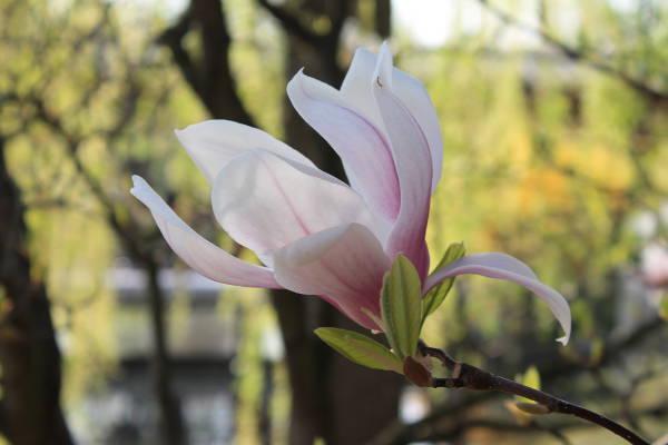 jardins-du-monde-fleur
