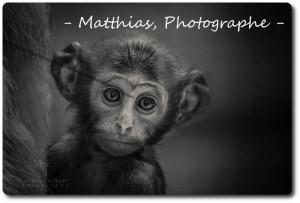 matthias-photographe