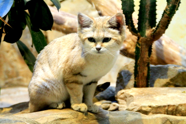 chat des sables zoo Berlin
