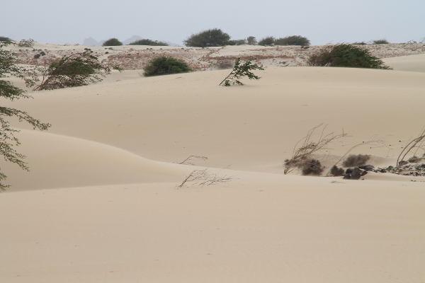Cap Vert Boa Vista déser de Viana